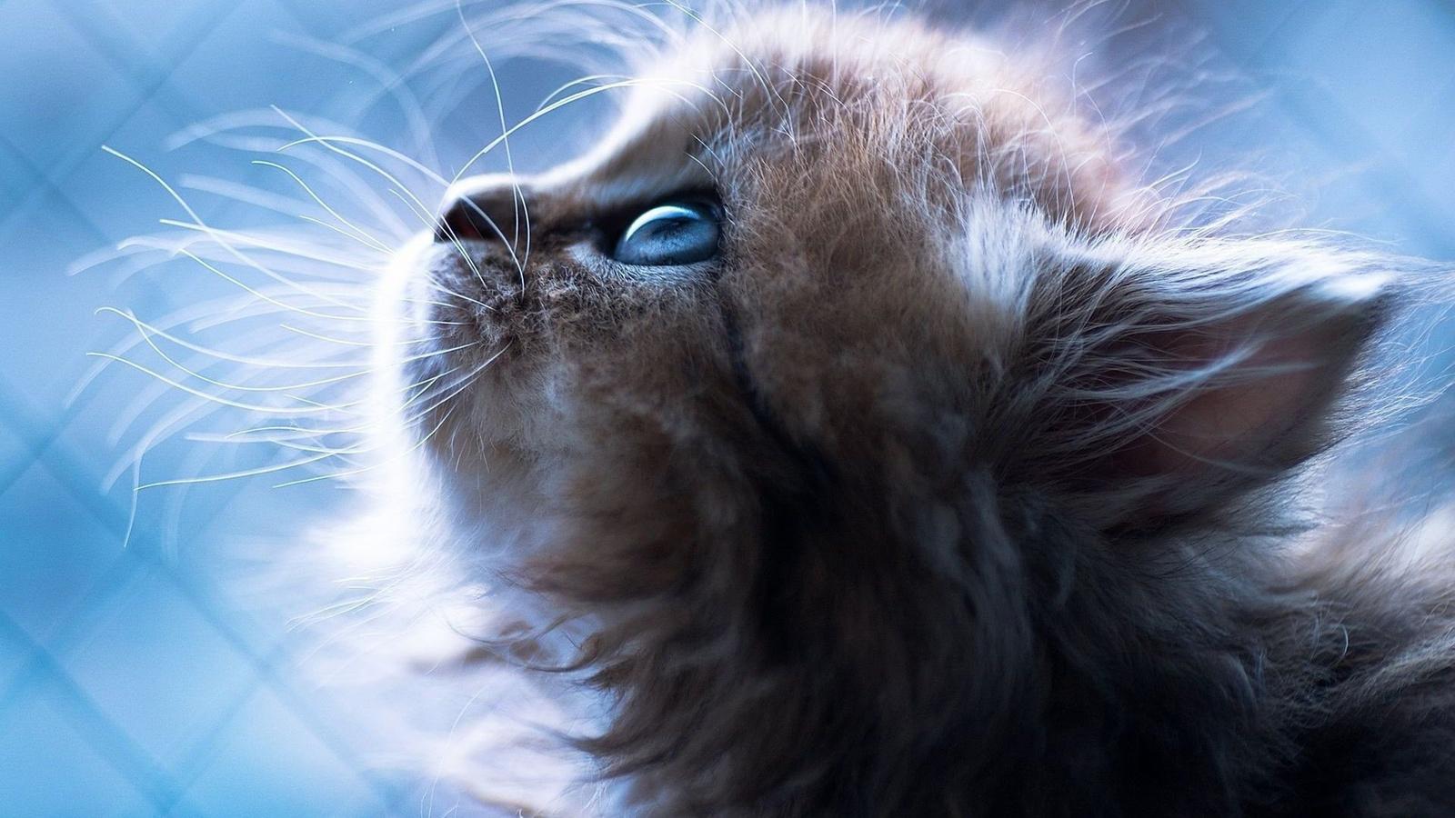 Красивые коты картинка на экран