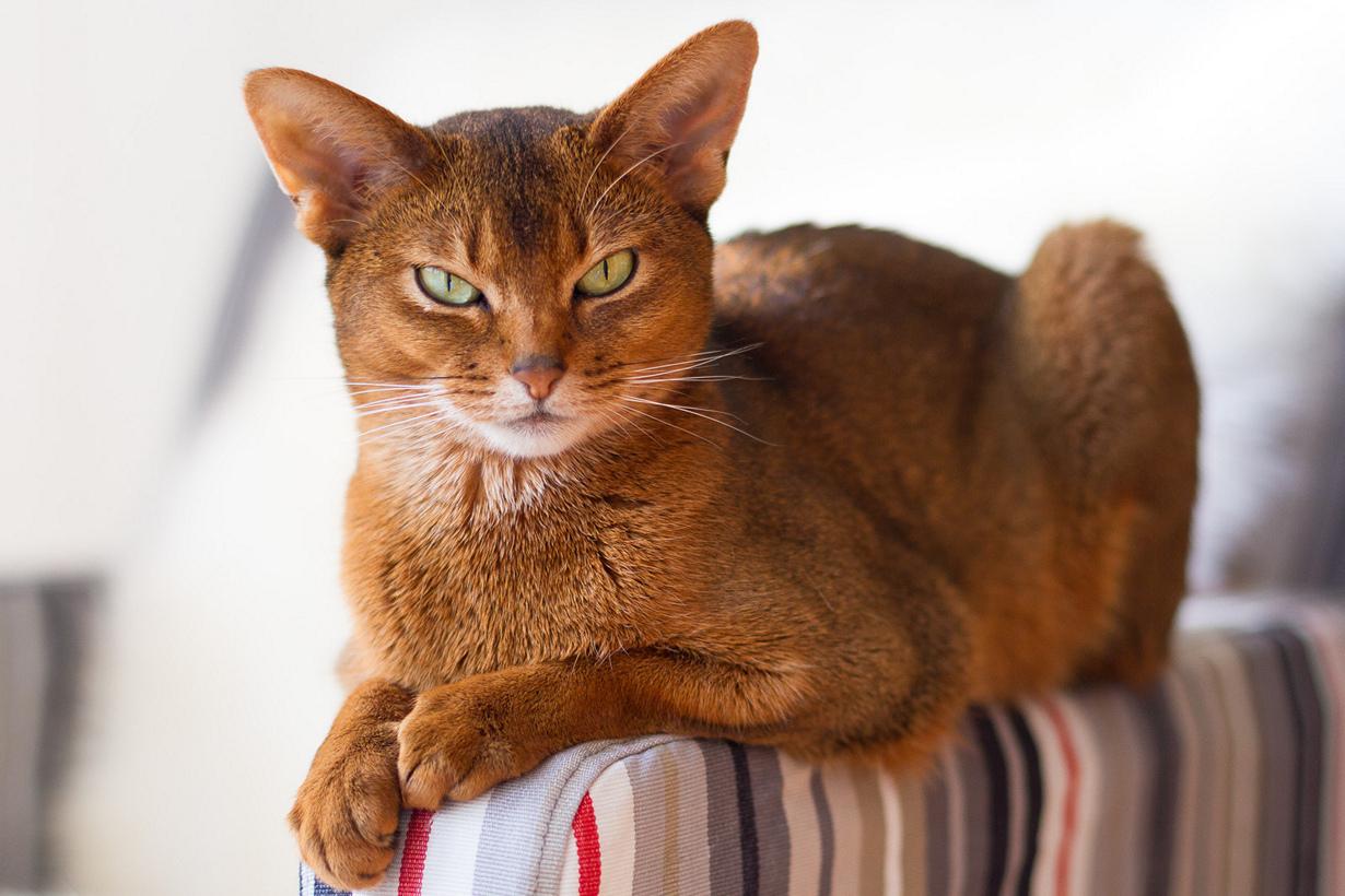 втором красивейшие коты мира него