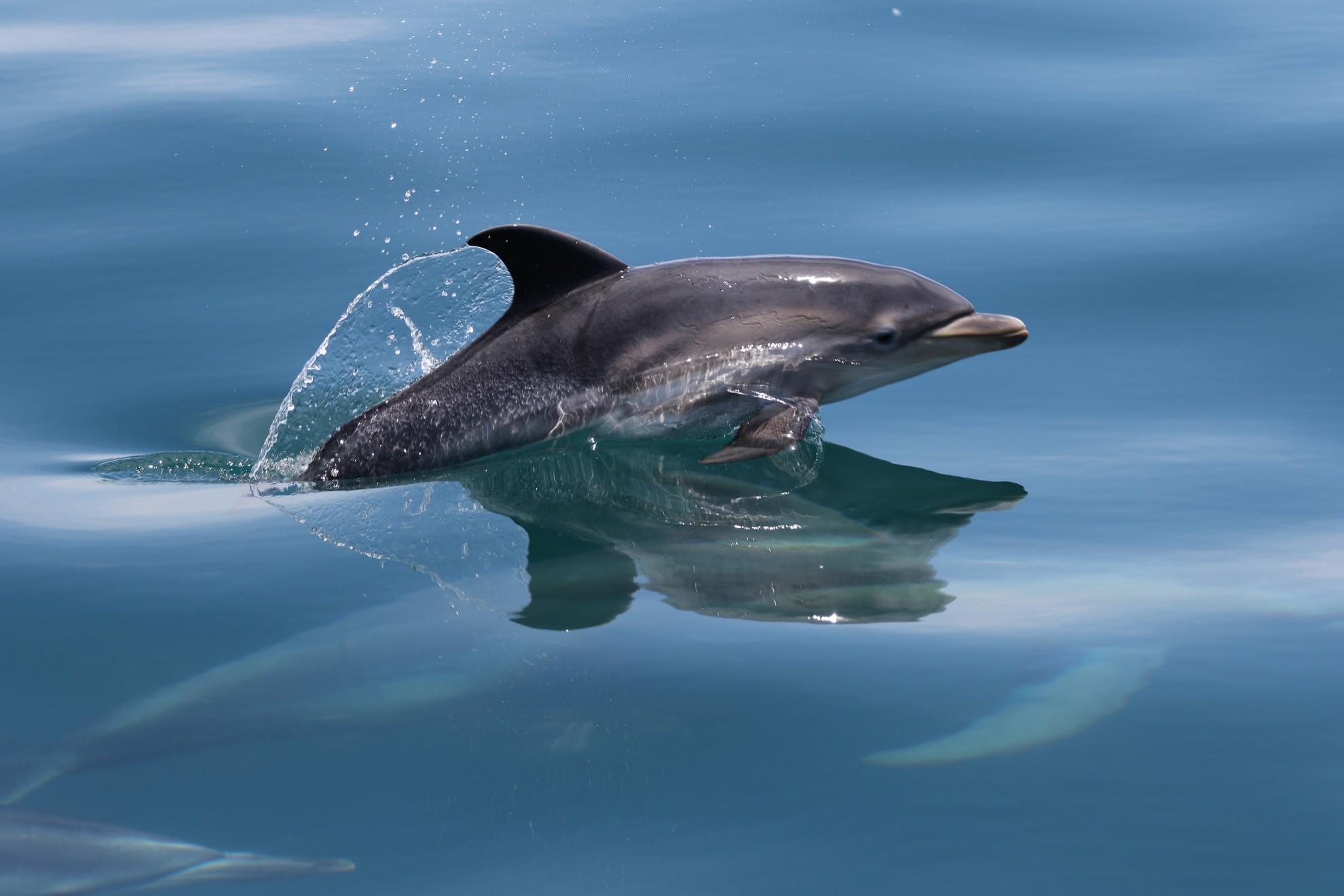 крупная картинка дельфина очень красивая