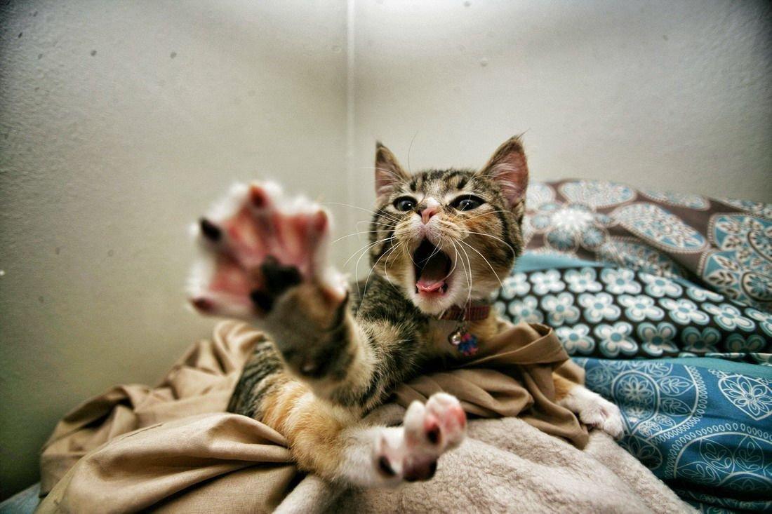 Смотреть смешные картинки с кошками и только с кошками