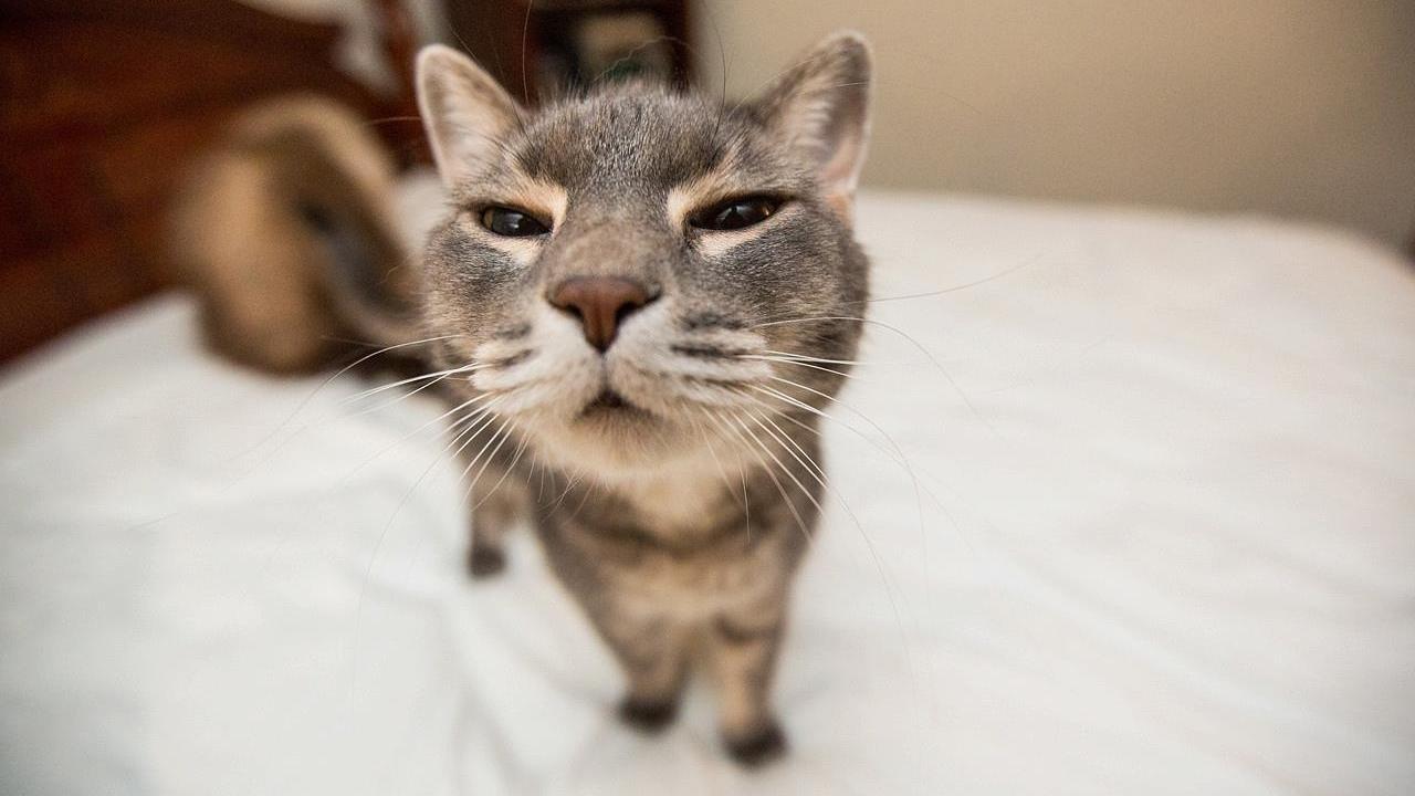 поверхности кошки фото с приколами сегодняшний день