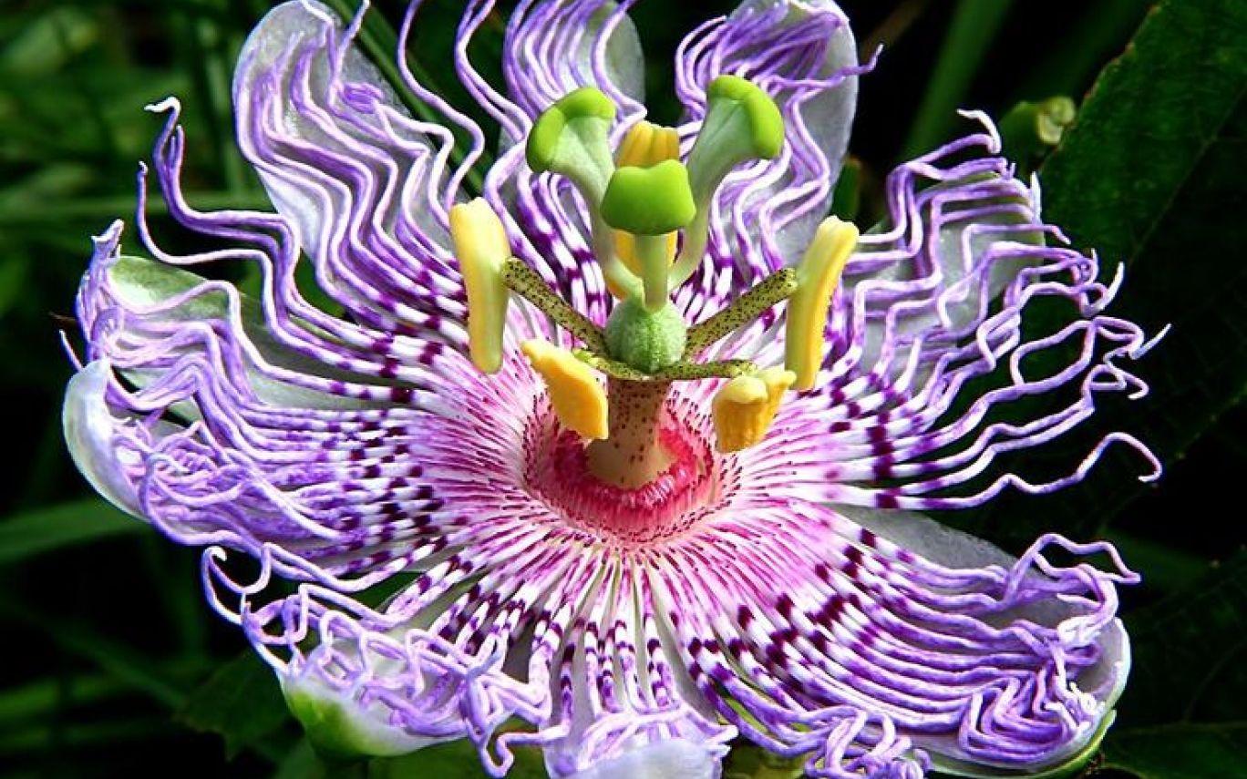 Необыкновенные цветы фото
