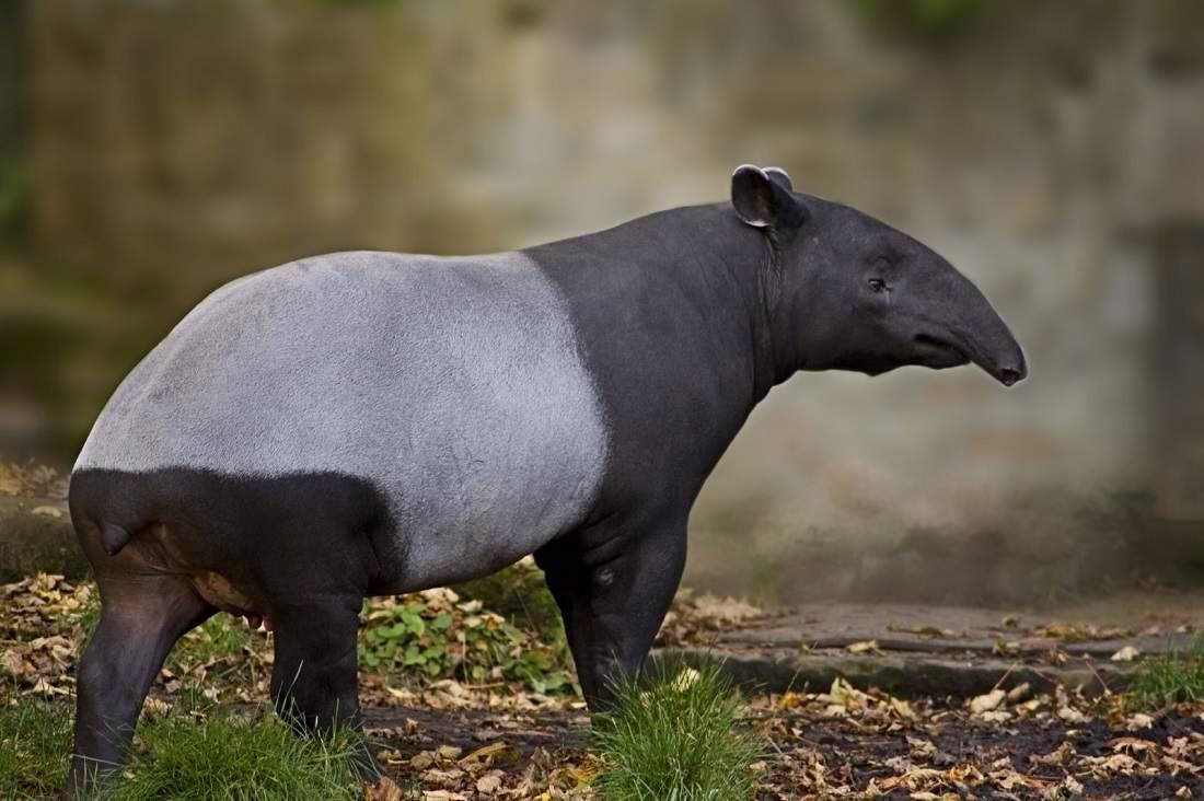 фотографии новых видов животных различных зданий является