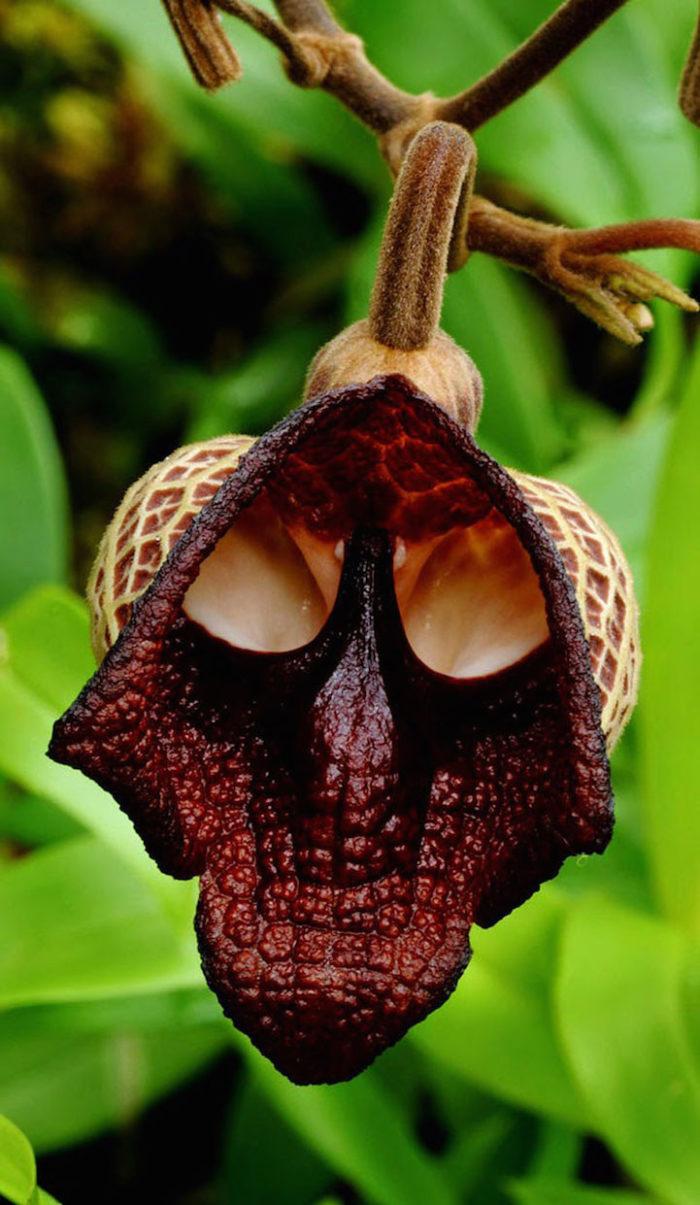 фигурирует картинки про редкие цветы множество хитростей