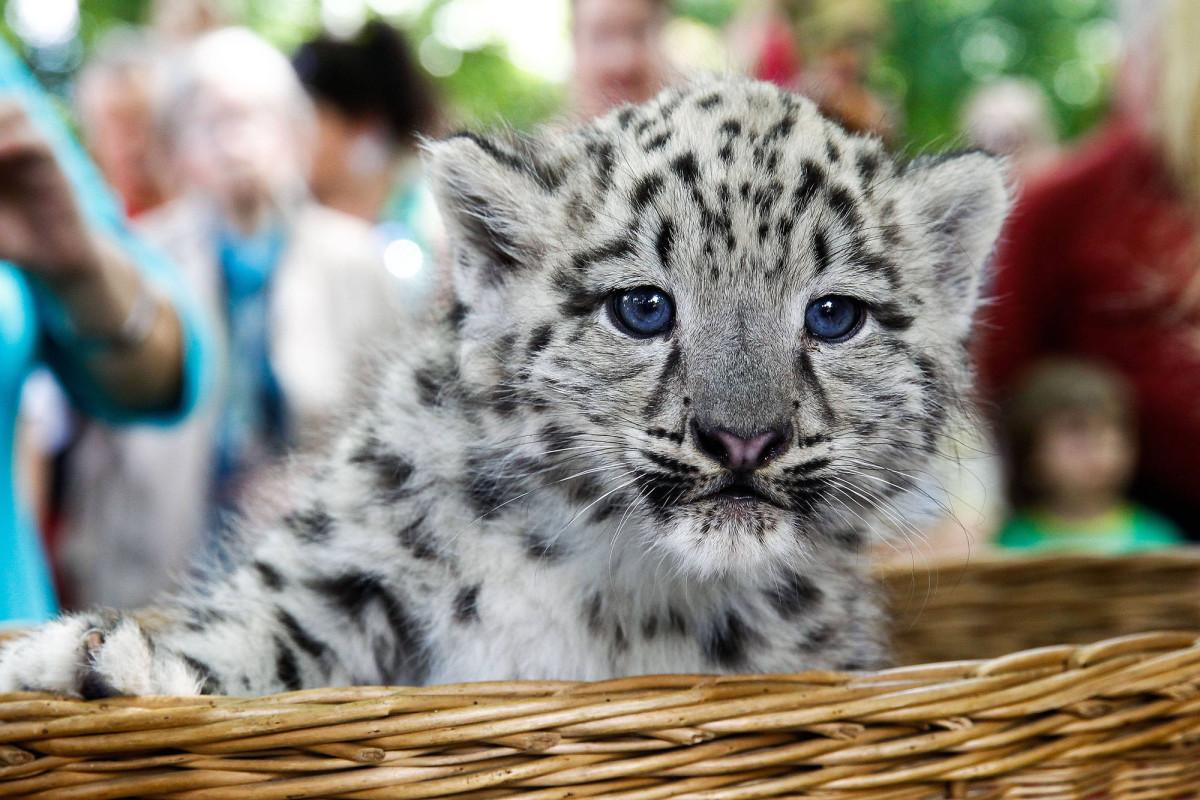 фотографии самых редких животных видишь