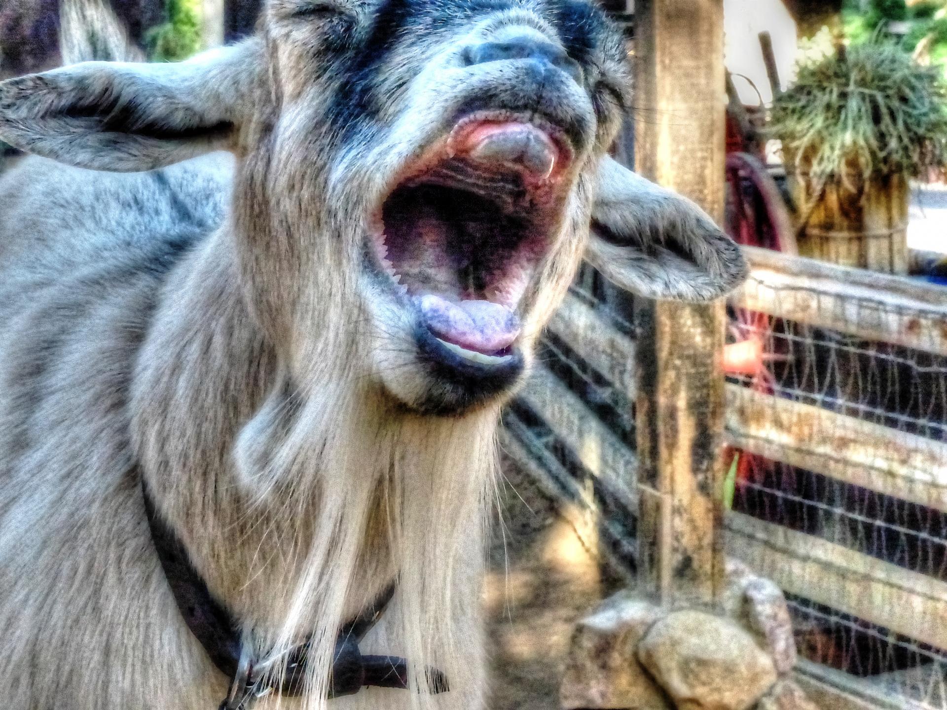 ржачный козел картинки