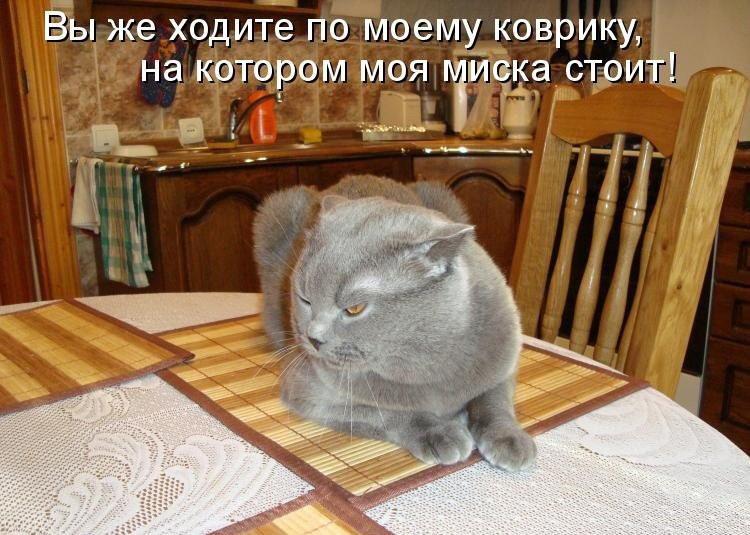 Картинки прикольные коты с надписями онлайн программа