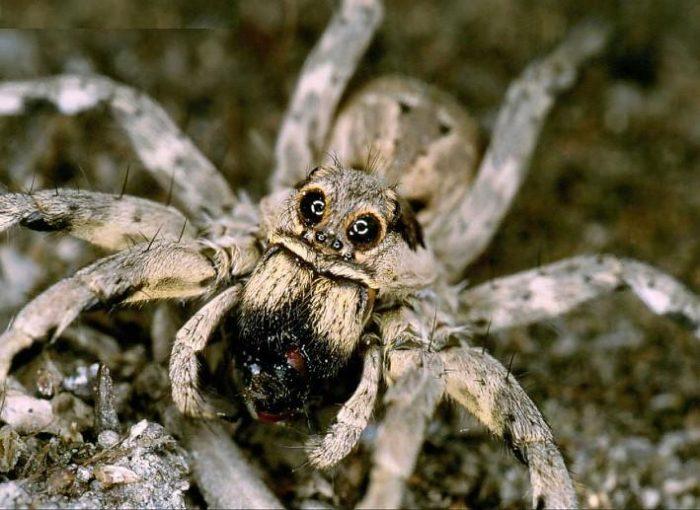 В казахстане какие пауки водятся фото