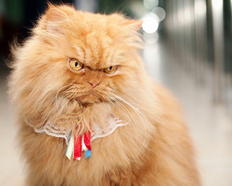 Картинки самого злого кота