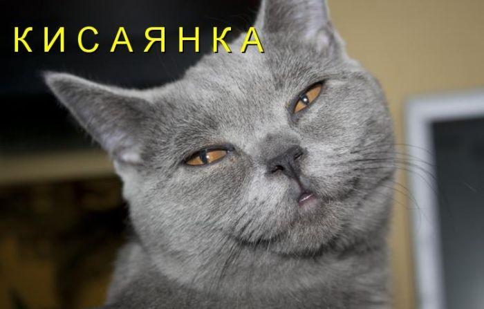 Картинки с котами смешные с надписями онлайн программа