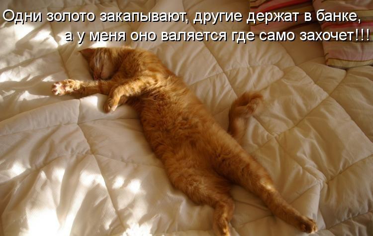 Прикольные картинки с надписями ржачные про котов и кошек, днем
