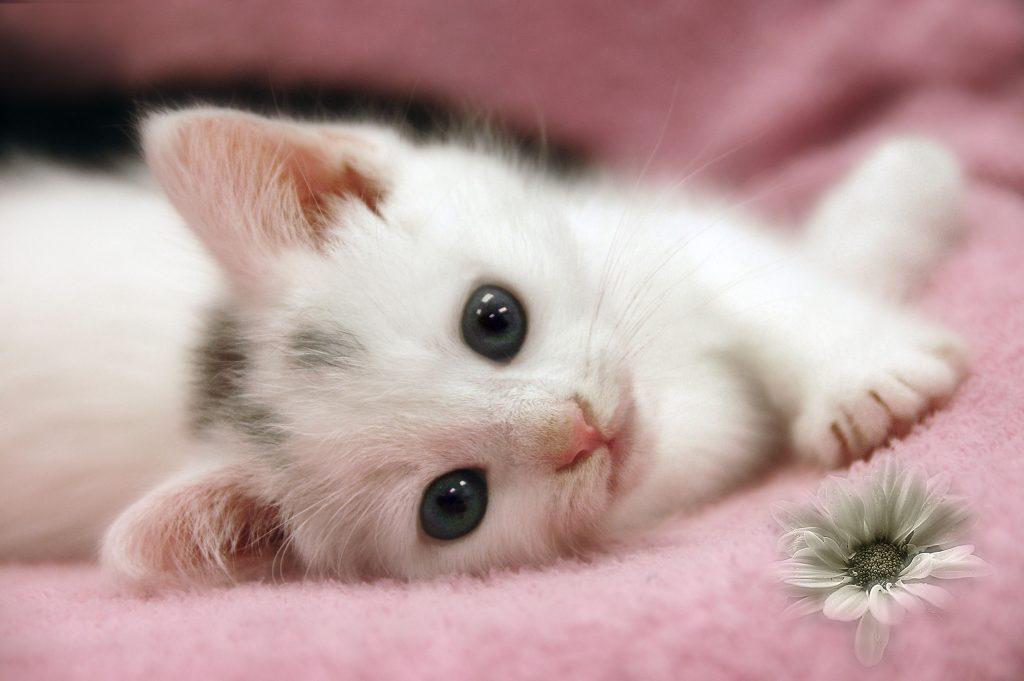 комплектации мимимишные котята картинки открыток, можно выполнить