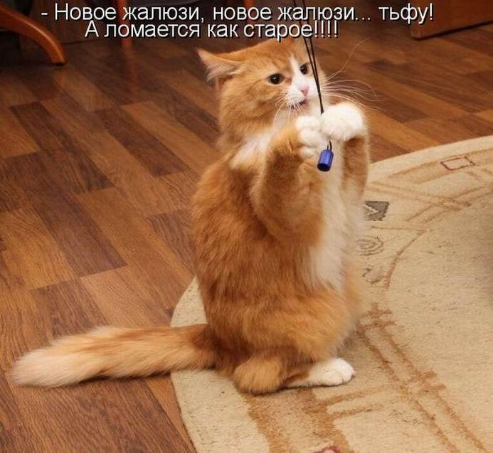 Смотреть картинки котиков с надписями