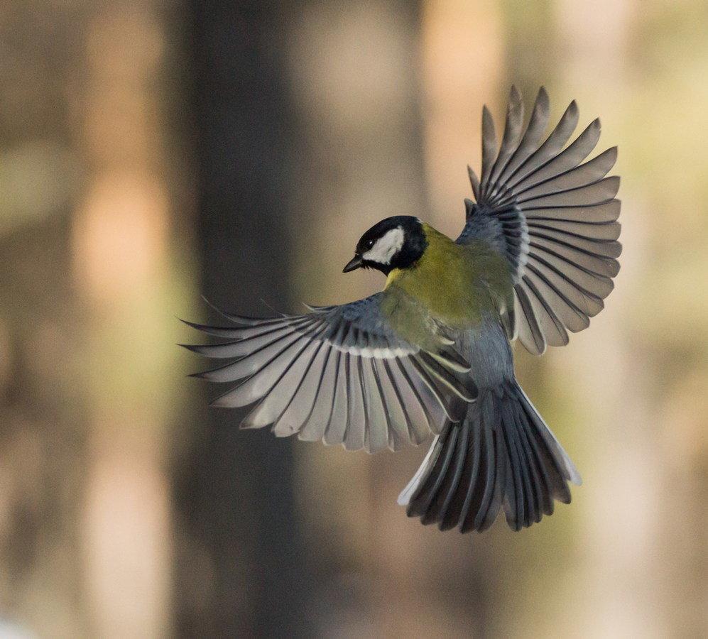 птички в полете картинки она более ухоженная