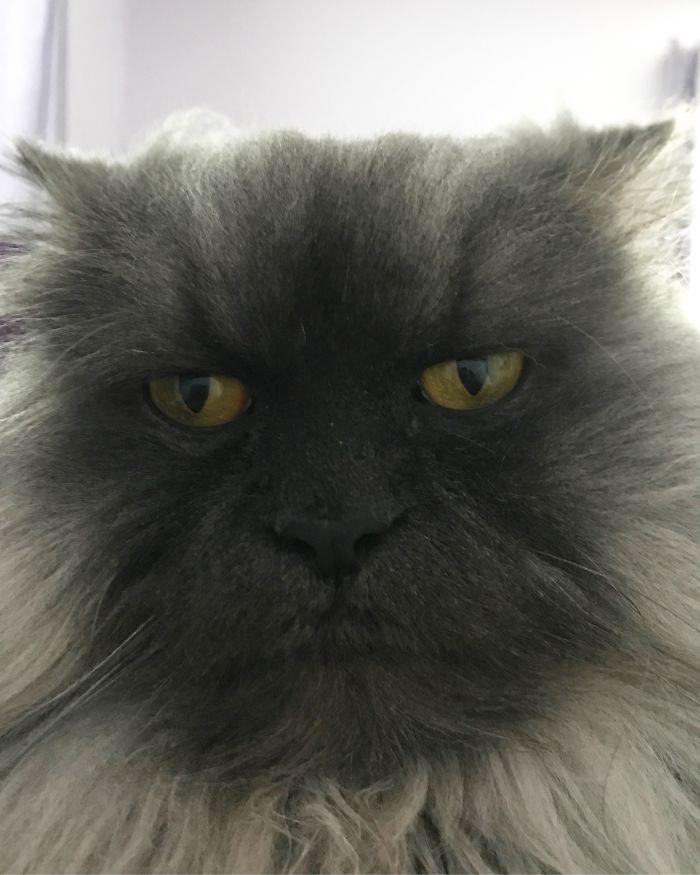 помещениями самый злой кот фото виды шигелл идентичны