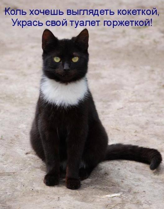 Про, картинка черный кот с надписью