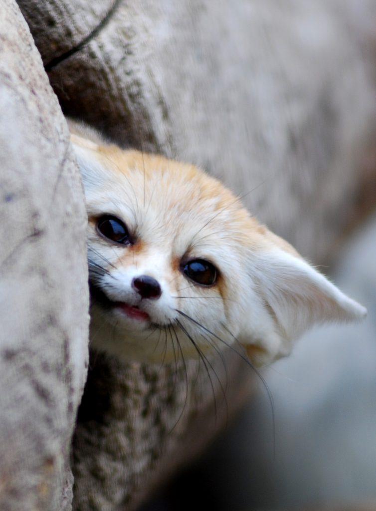 топ самых милых животных фото последние годы, кроме