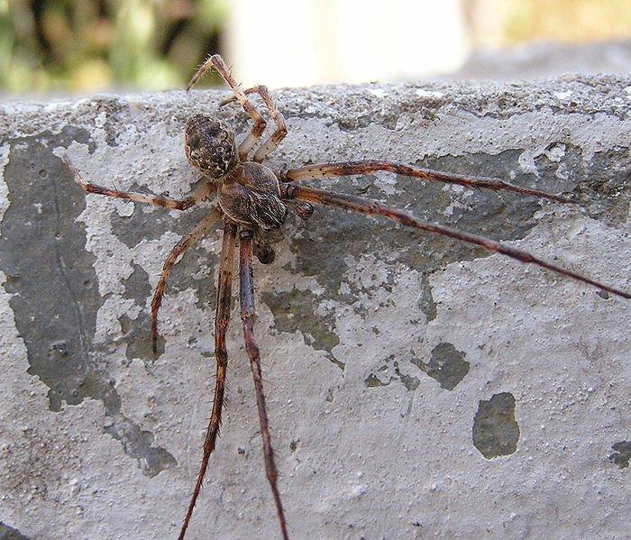 в казахстане какие пауки водятся фото ходатайствует аресте