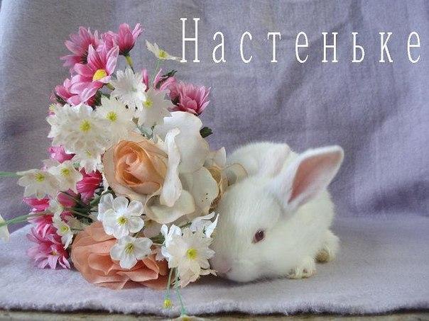 Картинки цветы настеньке