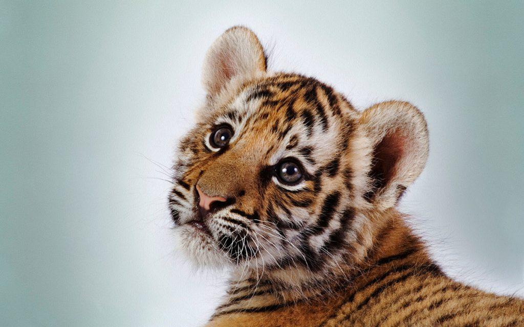 шелковые классные фото животных редкими зубьями выбирают