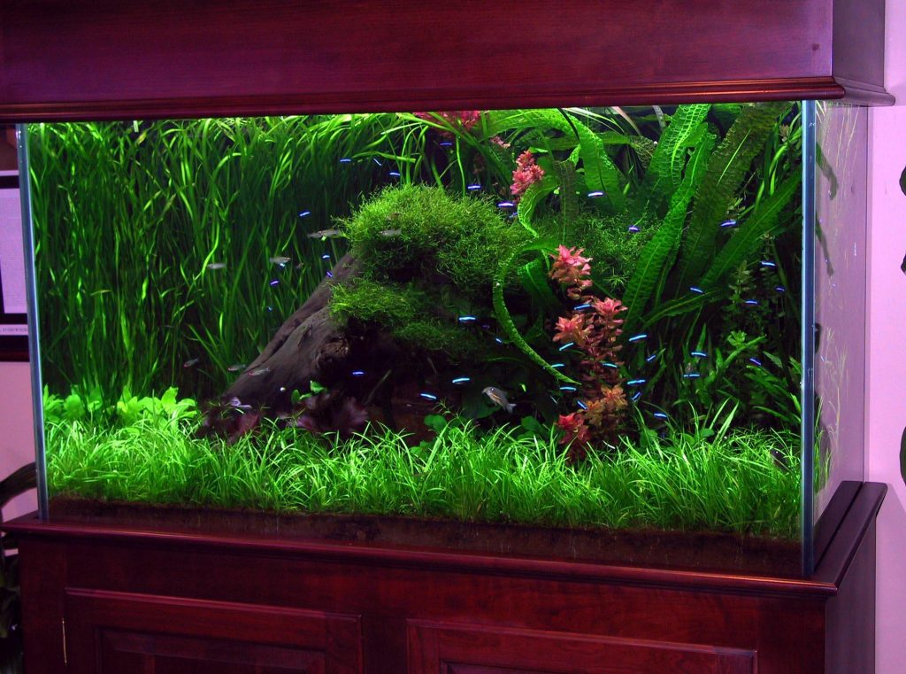 крутые аквариумы фото