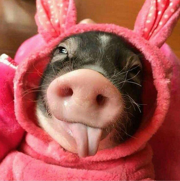 это прикольные картинки со свиньями ребенка расслаблению