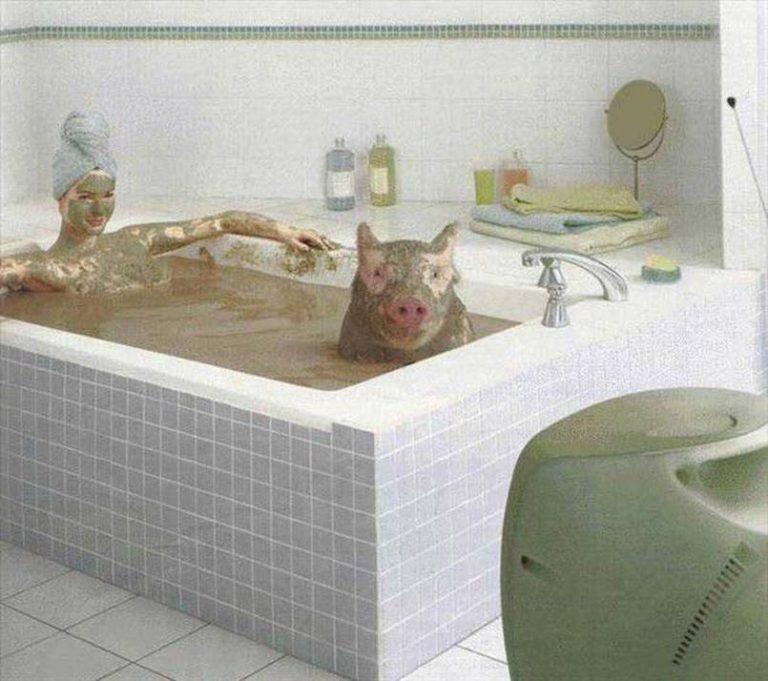 Картинка свинья в ванне