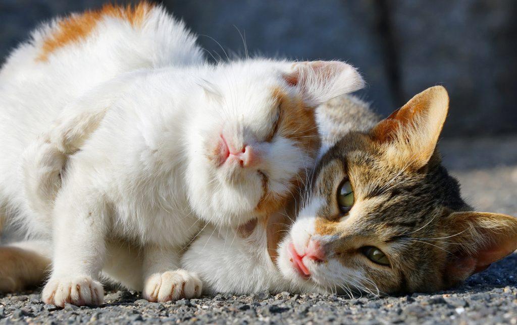 Котик нежится картинки