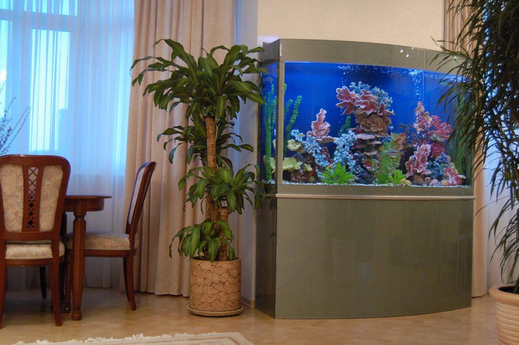 Самые красивые домашние аквариумы фото