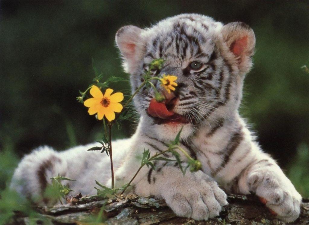 прикольные картинки на аву животные природа только близко