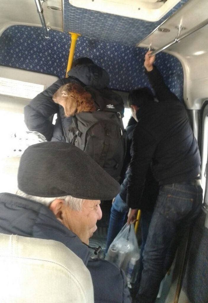 Любые красивые, люди в автобусе приколы картинки