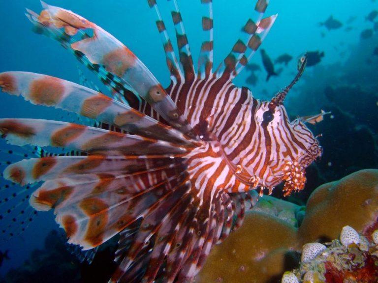 фото морских обитателей с описанием универсальные