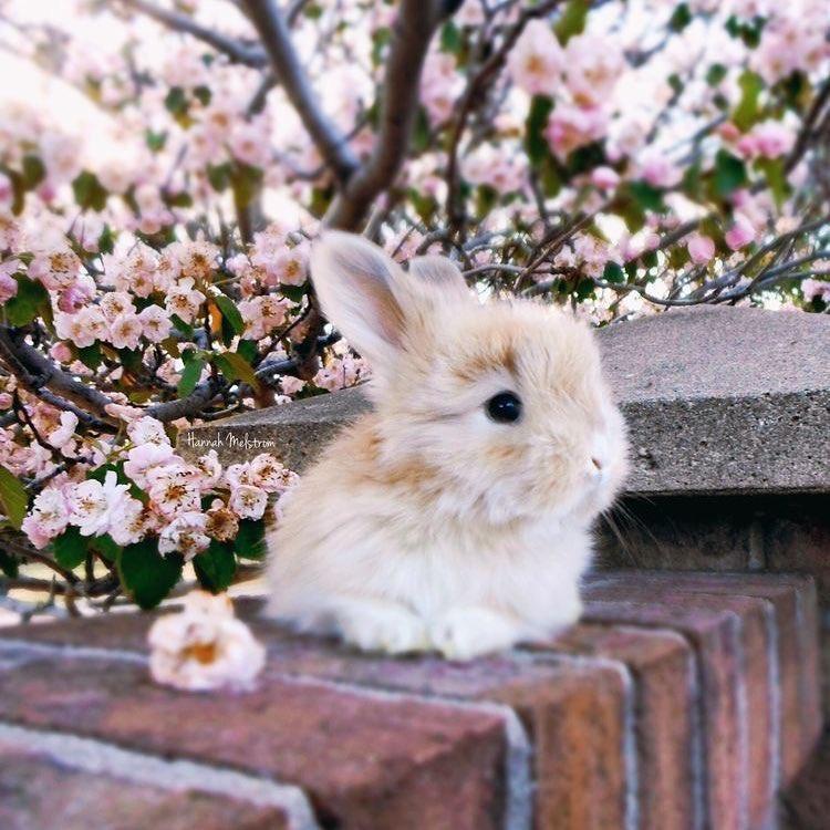 кролик красивые фото тоже
