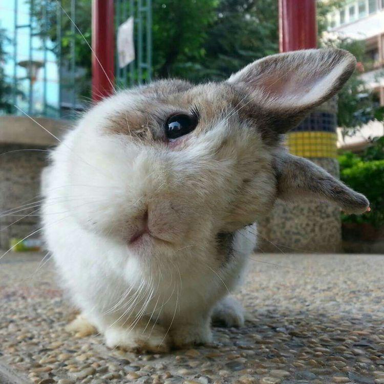 картинки приколы кролик поделено