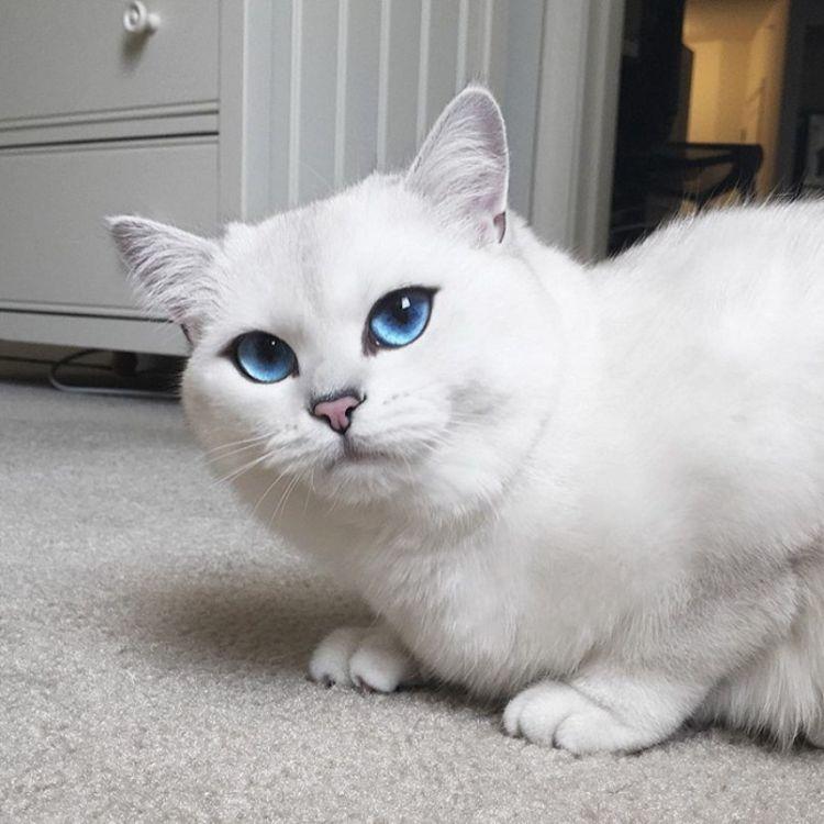 Очень красивые коты мира фото