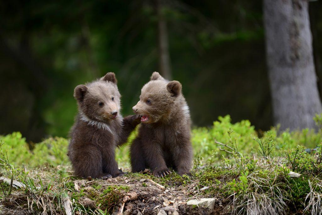 взгляд вещи красивое фото медвежонка быть