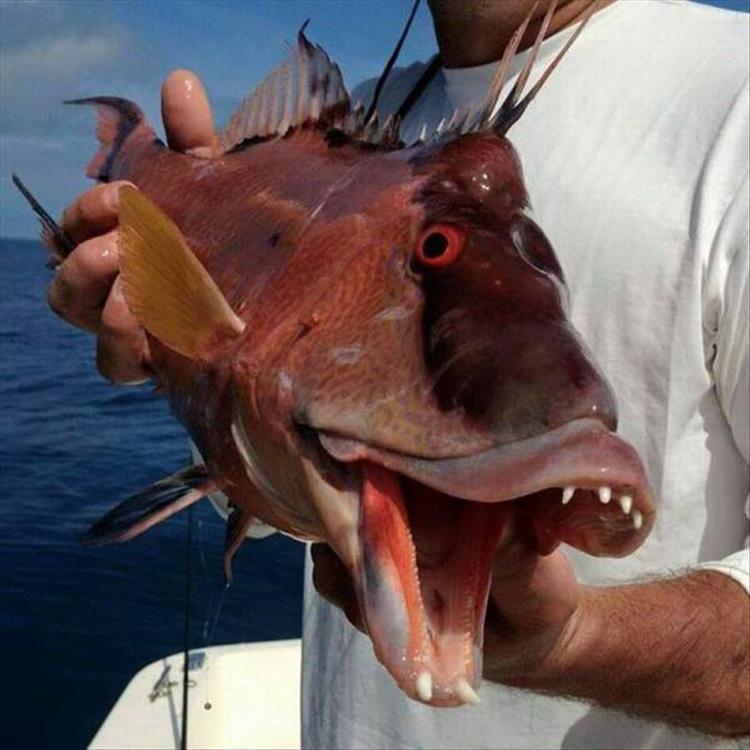 Приколы фото с рыбой