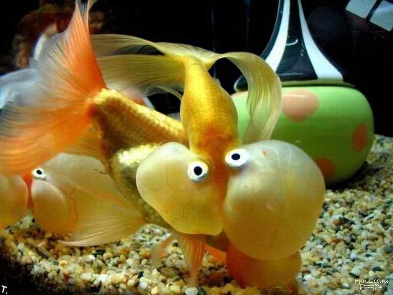 смешная картинка рыба в аквариуме иногда люди