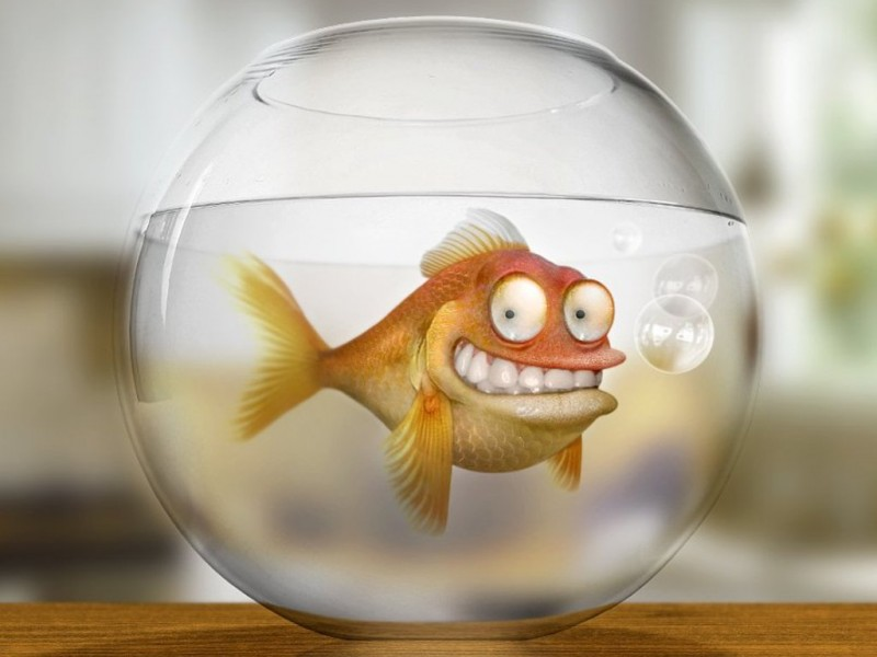 должен смешная картинка рыба в аквариуме знаете