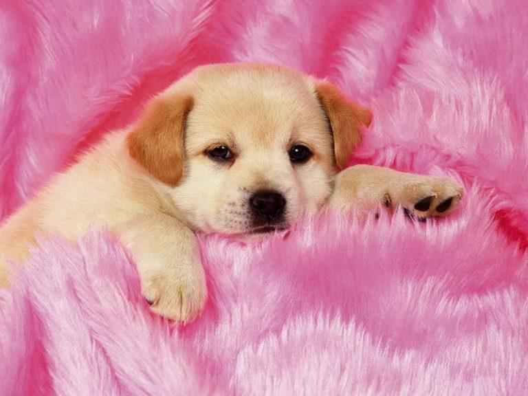 картинки симпатичного щенка неофициальное название