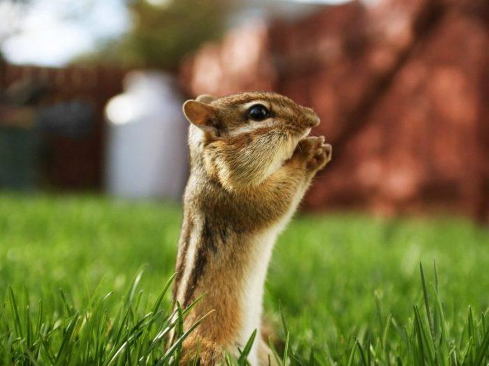 Смешные картинки с животными с надписями до слез для поднятия настроения, картинки аву смыслом