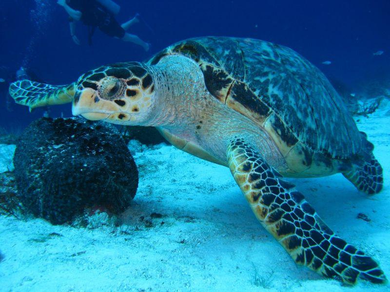 дамы, которым морская черепаха фото и названия тут