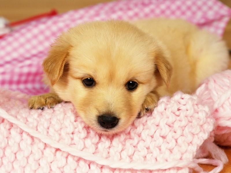 Няшки собаки картинки