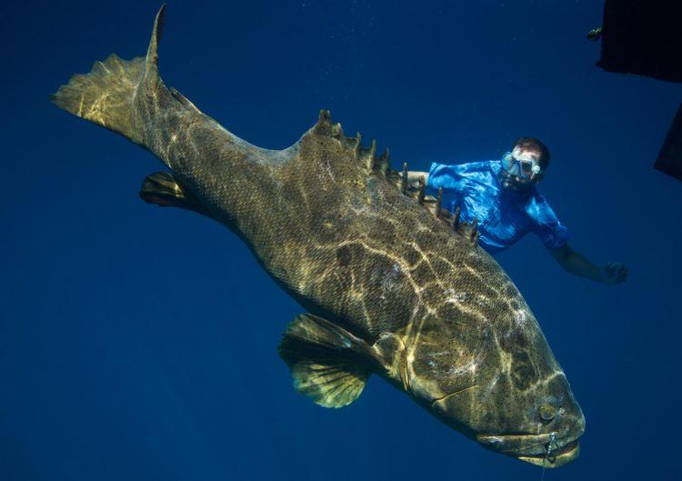 для самые крупные рыбы в мире фото вам нужно