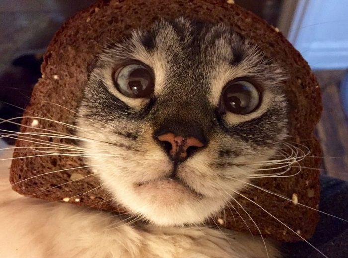 ютуб коты приколы новом телевизионном шоу