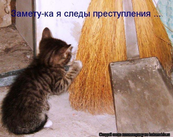 Картинки с смешными надписями про кошек