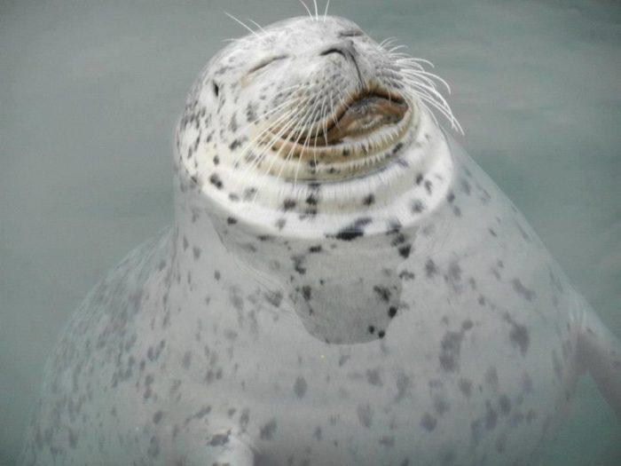 Тюлени прикольные картинки