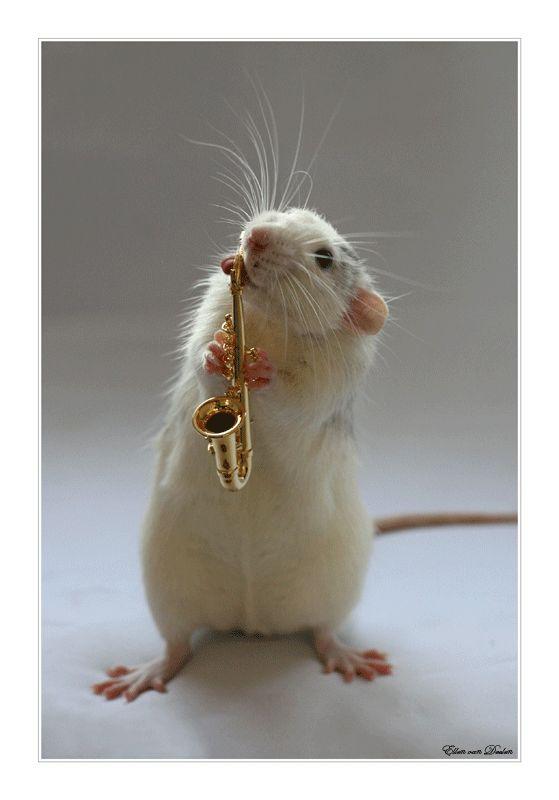 результате ушел фото прикольных крыс стоит