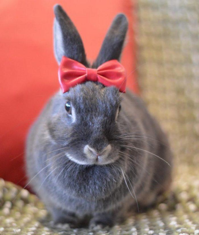 картинки приколы кролик где