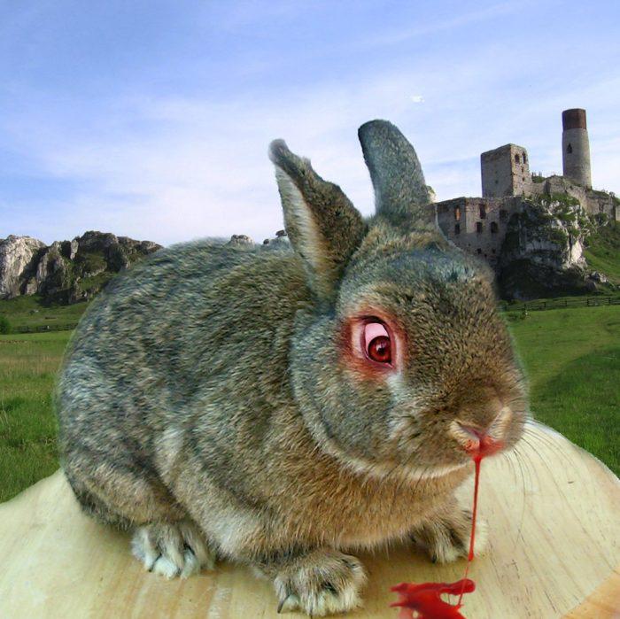 ритуальную маску приколы про кроликов картинки панике муж говорит